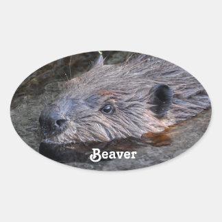 Foto salvaje de la fauna del castor de la natación pegatina ovalada