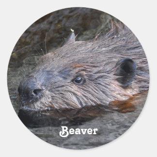 Foto salvaje de la fauna del castor de la natación pegatina redonda