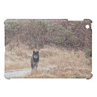 Foto salvaje del lobo