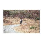 Foto salvaje del lobo impresion de lienzo