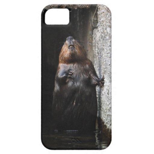 Foto salvaje derecha linda de la fauna del castor iPhone 5 coberturas