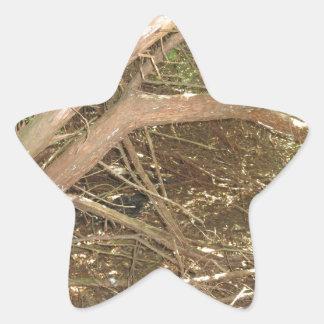 Foto SALVAJE NVN662 de New Jersey de la colina de Pegatina En Forma De Estrella