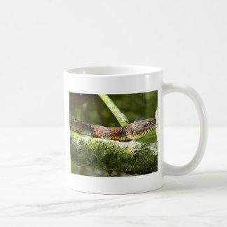 Foto septentrional de la serpiente de agua taza clásica