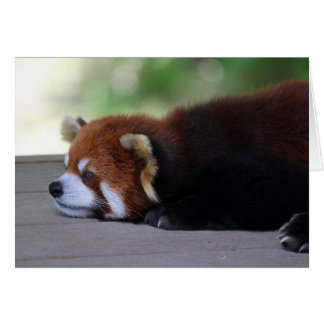 Foto soñolienta de la panda roja tarjeta de felicitación