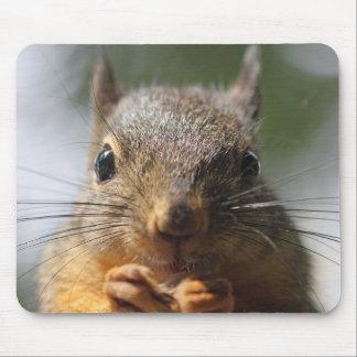Foto sonriente de la ardilla linda alfombrilla de ratones