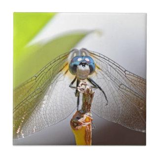 Foto sonriente de la macro de la libélula azulejo cuadrado pequeño
