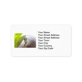 Foto sonriente de la macro de la libélula etiquetas de dirección