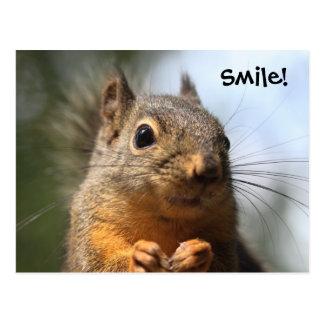 Foto sonriente del primer de la ardilla linda postales