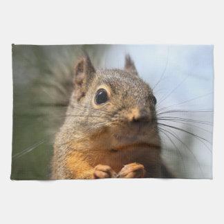 Foto sonriente del primer de la ardilla linda toalla de cocina