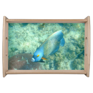 Foto subacuática de Aruba de pescados Bandejas