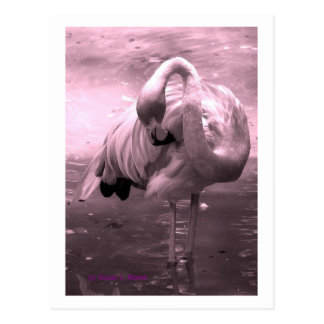 ¡Foto teñida rosada, flamenco rosado del flamenco! Postales