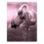 ¡Foto teñida rosada, flamenco rosado del flamenco! Tarjeta Postal