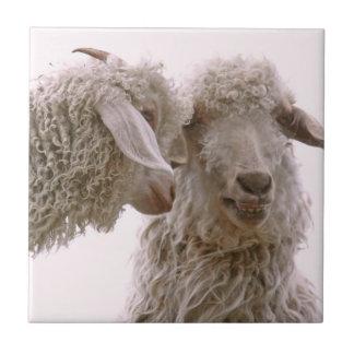 Foto tonta de las cabras azulejo ceramica