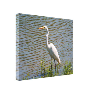 Foto tropical del pájaro del Egret blanco Impresión En Tela
