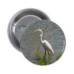 Foto tropical del pájaro del Egret blanco Pin