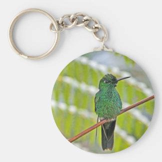 Foto verde del colibrí llavero