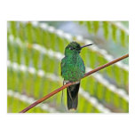 Foto verde del colibrí postal