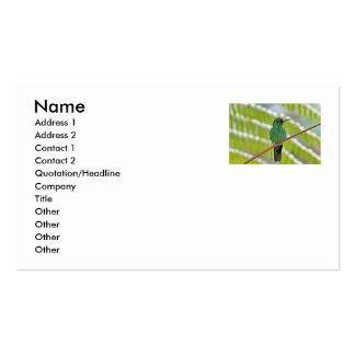 Foto verde del colibrí plantillas de tarjeta de negocio