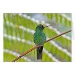Foto verde del colibrí tarjeton