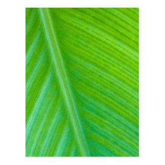 Foto verde hermosa de la macro de la hoja postales