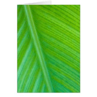 Foto verde hermosa de la macro de la hoja tarjeta pequeña