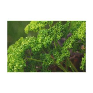 Foto verde natural de la hierba del perejil para impresion en lona