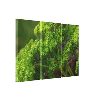 Foto verde natural de la hierba del perejil para impresiones en lona estiradas