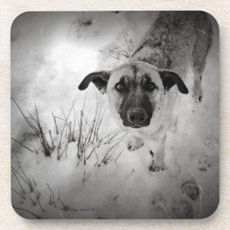 Foto vieja del perro posavasos
