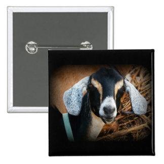 Foto vieja del retrato de Nubian de la cabra Pin Cuadrado
