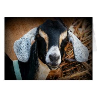 Foto vieja del retrato de Nubian de la cabra Tarjeta