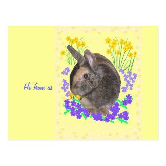 Foto y flores lindas del conejo tarjeta postal