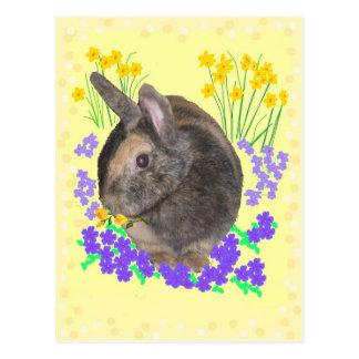 Foto y flores lindas del conejo tarjetas postales
