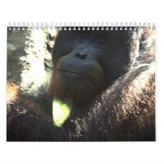 Fotografía 2011 de la fauna calendario