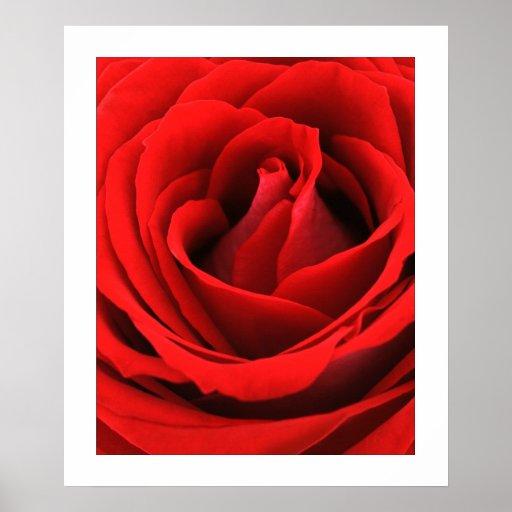Fotografía 24x20 de la bella arte del rosa rojo, r póster