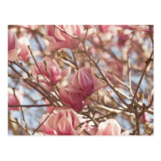 Fotografía abstracta de un árbol de tulipán rosado postal