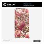 Fotografía abstracta de un árbol de tulipán rosado calcomanías para el iPhone 4