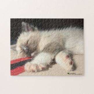 Fotografía adorable del gatito el dormir rompecabezas con fotos