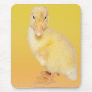 Fotografía amarilla adorable del anadón alfombrilla de ratón