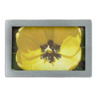 Fotografía amarilla del tulipán hebillas cinturon rectangulares