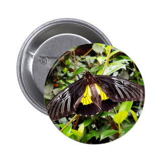 fotografía amarilla negra bonita de la mariposa pin redondo de 2 pulgadas