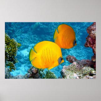FOTOGRAFÍA amarilla tropical exótica de 380037 pes
