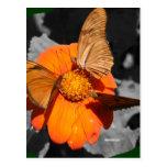 Fotografía anaranjada de las mariposas de la flor postal