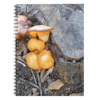 Fotografía anaranjada de los hongos del bosque