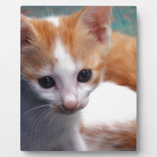 Fotografía anaranjada del gatito placas de plastico