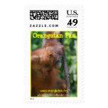 Fotografía animal de la fauna del orangután