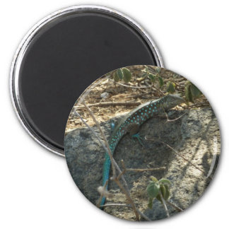 Fotografía animal tropical del lagarto de Aruban Imán Redondo 5 Cm