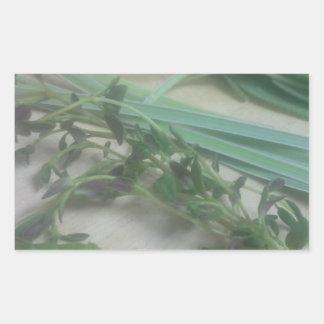 Fotografía antigua de las hierbas pegatina rectangular