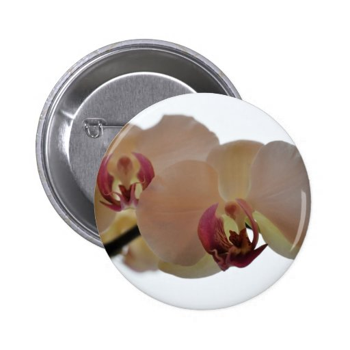 Fotografía apacible de la orquídea pins