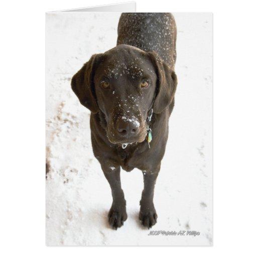 Fotografía asperjada nieve de Labrador del Tarjeta De Felicitación