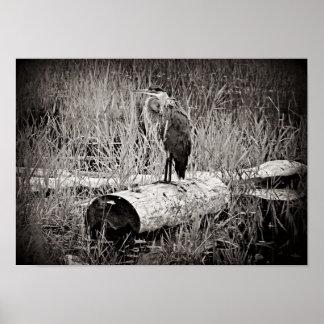 Fotografía azul de la garza - blanco y negro impresiones